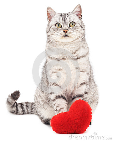 Free Cat With Toy Heart. Royalty Free Stock Photos - 65313688