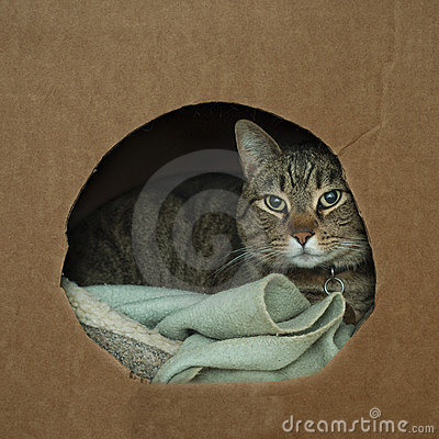 Cat wrapped up in cozy box