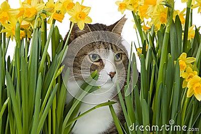 Cat in between yellow flowers