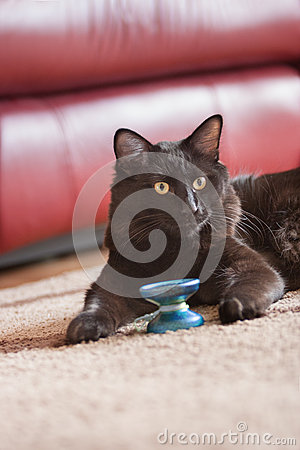 Cat with yoyo
