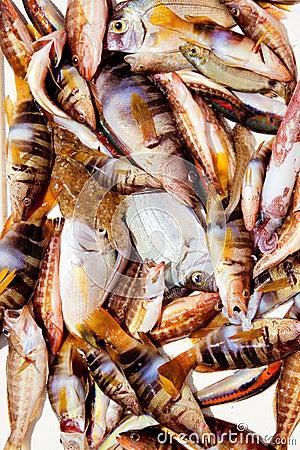 Catch of fish in Mediterranean bream squid