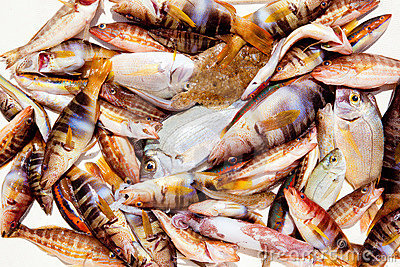 Catch of fish in Mediterranean bream squid