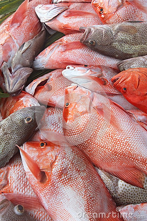 Free Catch Of The Day – Grouper And Red Snapper Royalty Free Stock Photos - 61387358