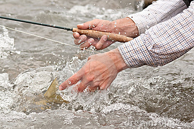Catch and release: fishes tail