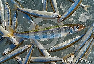 Catch on winter fishing 5