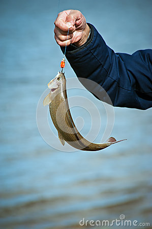 Catching a Fish