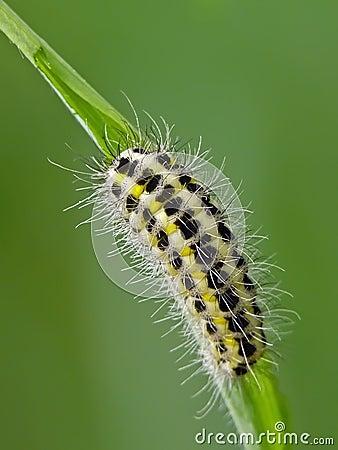 Free Caterpillar Royalty Free Stock Image - 27291946