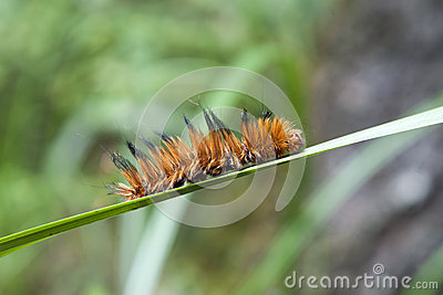 Caterpillar on Blade of Grass