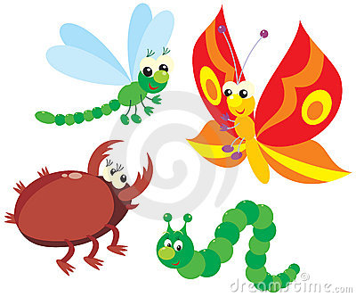 Caterpillar, butterfly, dragonfly and beetle