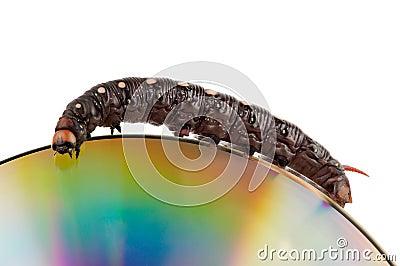 Caterpillar on a DVD