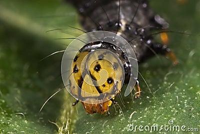 Caterpillar face closeup