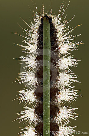 Caterpillar on grass