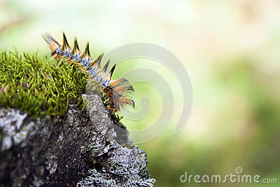 Caterpillar on Mossy Rock