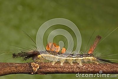 Caterpillar side view macro
