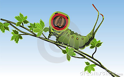 Caterpillar - Vector
