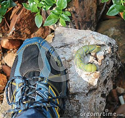 Free Caterpillars Big Green With Shoe Stock Photo - 40146790