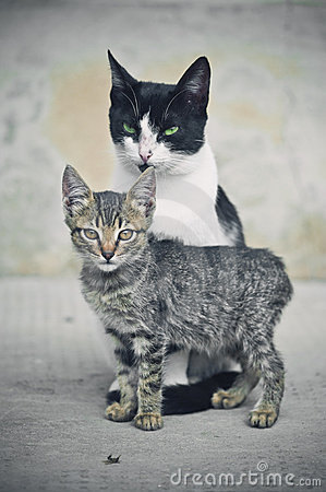 Free Cats Stock Photography - 16342892