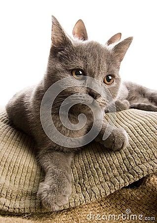 Free Cats Stock Photos - 3603033