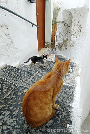 Cats in the alley Amalfi