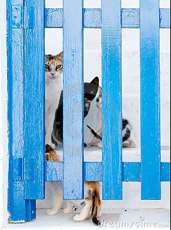 Cats behind a gate