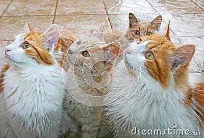 Cats behind window