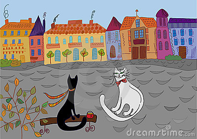 Cats  date in the town