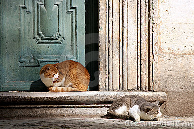 Cats in Dubrovnik