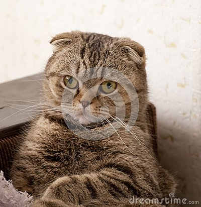 Free Cats Eye Royalty Free Stock Photo - 29730685