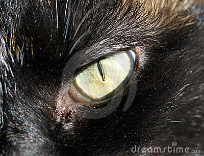 Cats Eye Close up