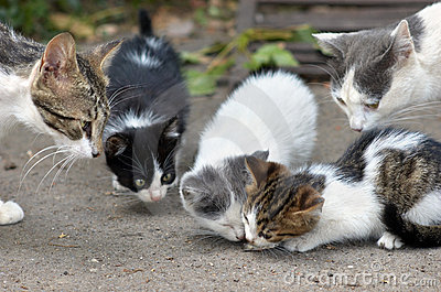 Cats family eating