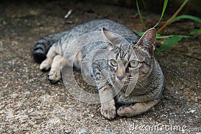 Cats glance