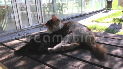 Cats and kittens in the garden. With sun stock footage