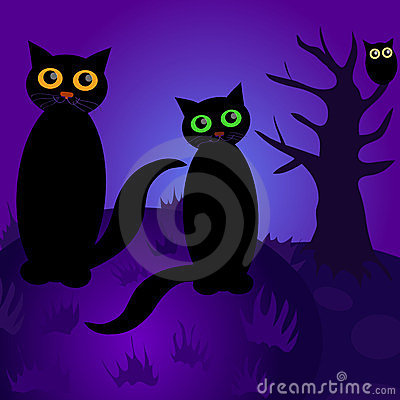 Cats at night