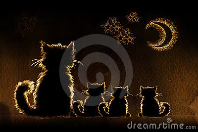 Cats in night