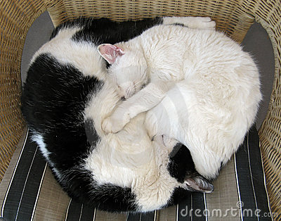 Cats relaxing  - Ying and Yang
