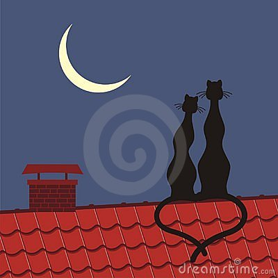 Cats on the roof