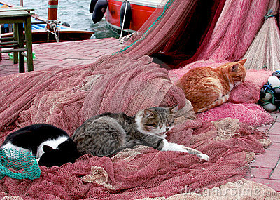 Cats sleeping on the fishing nets