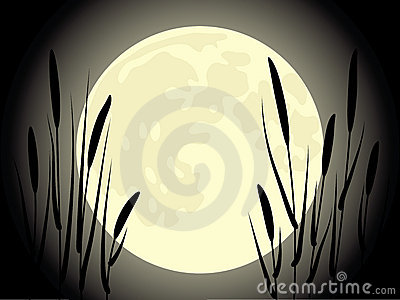 Cattail under the moon