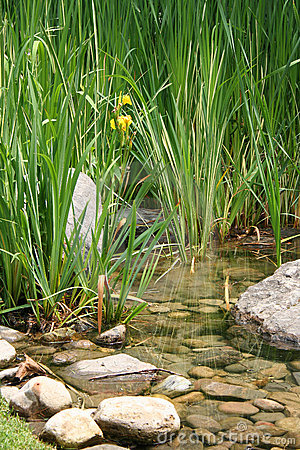Free Cattails Stock Images - 5799054