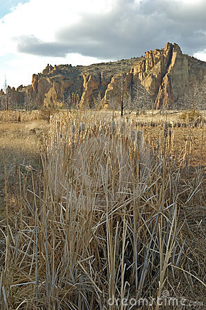 Cattails in the High Desert Vert