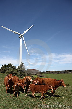Free Cattle And Wind Energy Royalty Free Stock Image - 14183646