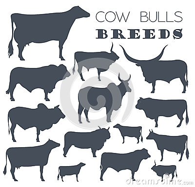 Free Cattle Breeding. Cow, Bulls Breed Icon Set. Flat Design Stock Photos - 79116353