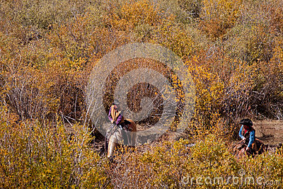 Cattle Drive Editorial Stock Photo