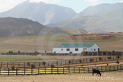 Cattle farm landscape