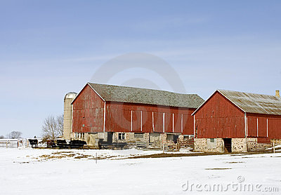 Cattle Farm In The Winter