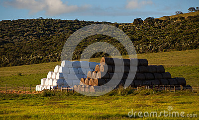 Cattle Feed Haystacks