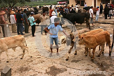 Cattle market Editorial Stock Photo