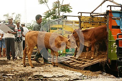 Cattle market Editorial Photo