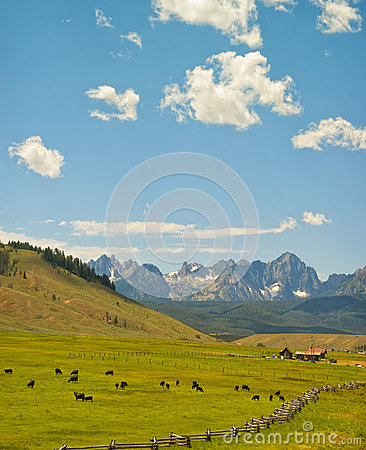 Cattle Ranch and Mountains, Idaho