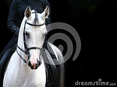 Cavaliere sull Arabo bianco